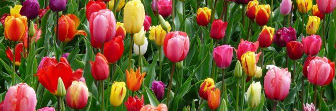 Spring Webinars Supply2Go